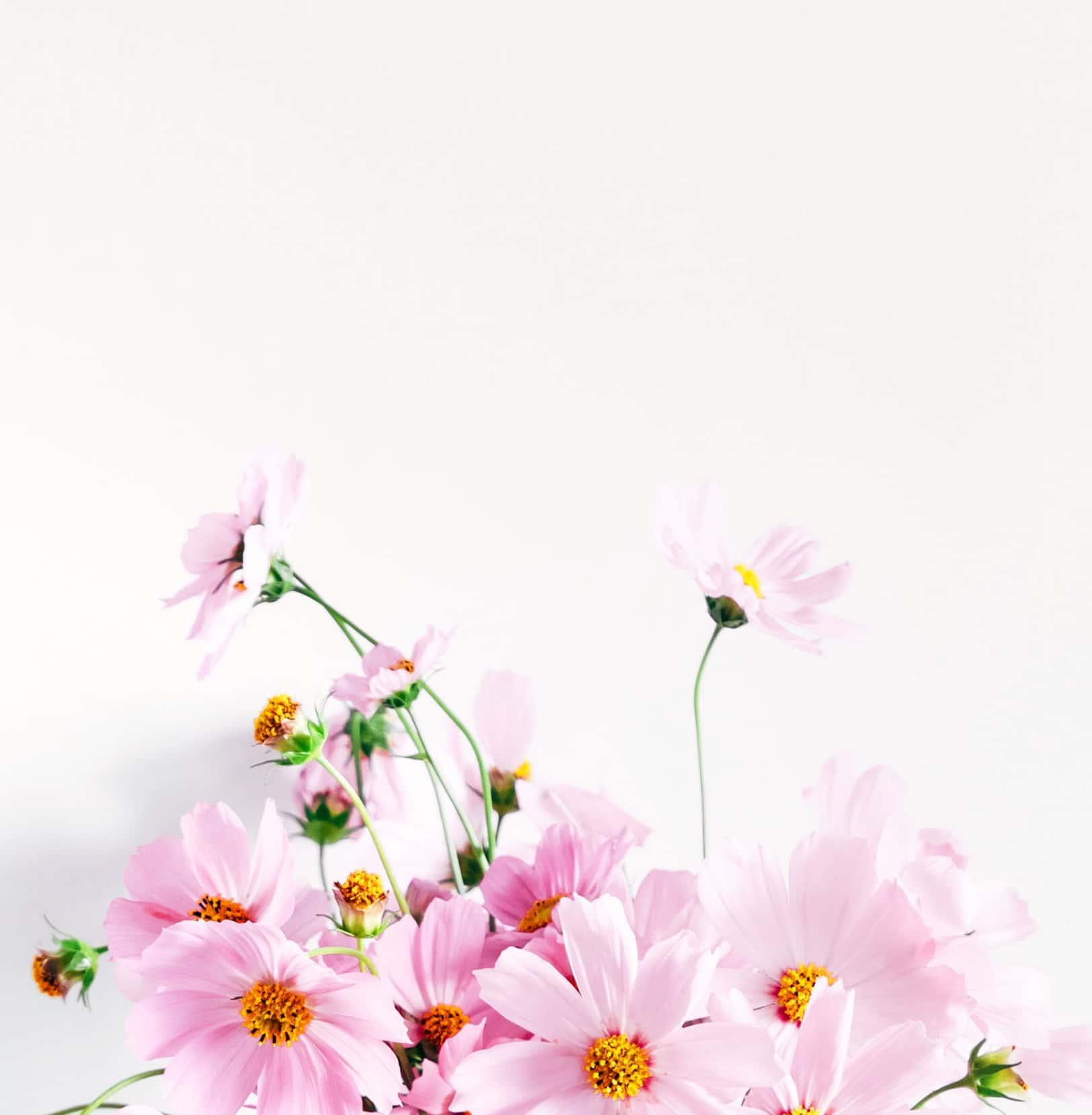 Arrangement of pink flowers.